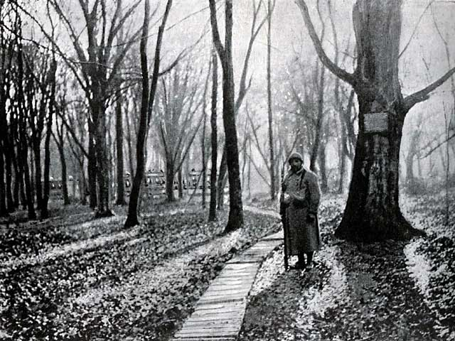 The Forest of Compiègne, France – the site of the Armistice between the Allies and Germany which ended World War I on 11 November 1918.